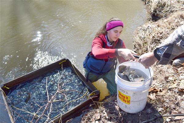CONSERVATION CLUB ASSISTS WITH KEYSTONE SELECT TROUT PROGRAM - Photo courtesy of Upper Dauphin County Sentinel